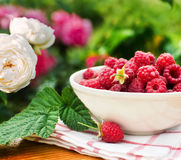 Raspberry. Bowl with fresh raspberry on table in the garden Stock Photography
