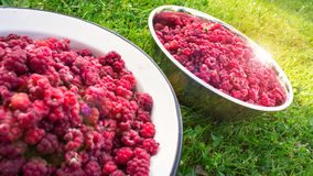 Raspberries in bowls. Raspberry in white bowls on the grass Royalty Free Stock Image