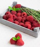 Raspberry box with mint and thyme light berries fruits summer rustic royalty free stock images