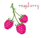 Raspberry Branch Royalty Free Stock Image