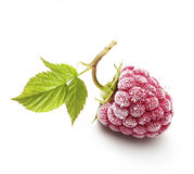 Raspberry branch isolated Stock Images