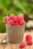 Raspberry  in a bucket. Beautiful raspberries in bucket isolated on natural background Royalty Free Stock Photography