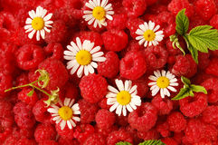 Raspberry and chamomile Stock Photos