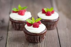 Raspberry chocolate cupcakes Stock Images