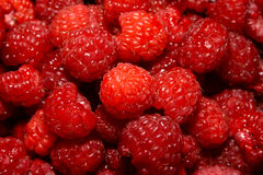 Raspberry close up Stock Photography