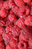 Raspberry Close-up Royalty Free Stock Photo