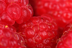 Raspberry close up Royalty Free Stock Photos