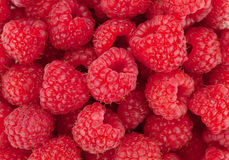 Raspberry closeup Royalty Free Stock Images