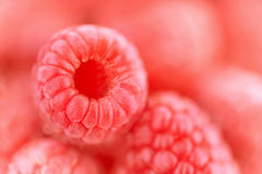 Raspberry closeup Royalty Free Stock Image
