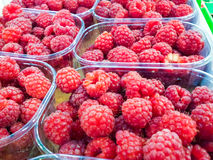 Raspberry. Closeup of raspberries in plastic containers at marketplace Stock Image
