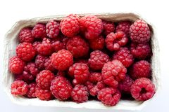 Raspberry in container Stock Image