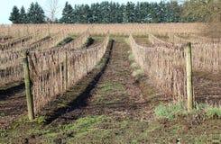 Winter Raspberry Acreage Stock Photography