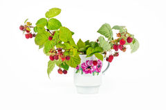 Raspberry is in a cup Royalty Free Stock Photos