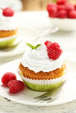 Raspberry cupcakes Stock Images