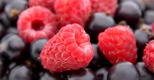 Raspberry and currant berries Royalty Free Stock Photos