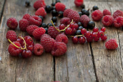 Raspberry and currant Stock Images