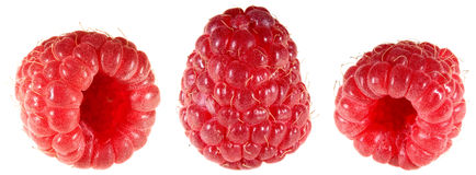 Raspberry Cutout Stock Photography