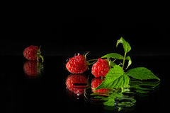 Raspberry on a dark background. Ripe and juicy raspberries on a dark background Stock Image