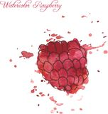 Raspberry drawing by watercolor Royalty Free Stock Photo