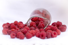 Raspberry. The raspberry is the edible fruit of a multitude of plant species in the genus Rubus of the rose family, most of which are in the subgenus Idaeobatus Stock Photo