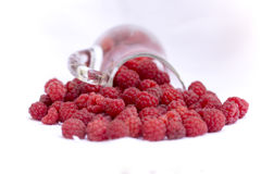Raspberry. The raspberry is the edible fruit of a multitude of plant species in the genus Rubus of the rose family, most of which are in the subgenus Idaeobatus Royalty Free Stock Photography