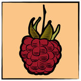 Raspberry-engraving-color Royalty Free Stock Images