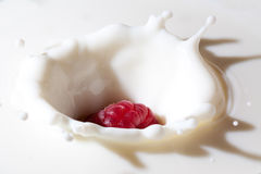 Raspberry falls into milk Royalty Free Stock Photo