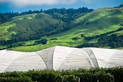 Raspberry Farm Stock Photography