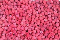 Raspberry field. Field of ripe raspberry. Horizontal photo Stock Photo