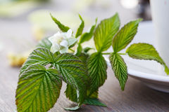 Raspberry flower on the table.  royalty free stock photos