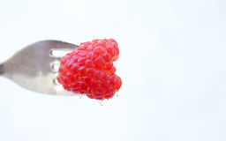 Raspberry on a fork Royalty Free Stock Photography