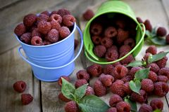 Raspberry is fresh in a bucket. Fruit-berry- freshness Stock Photos
