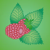 Raspberry. Fresh raspberry. Natural background in bright colors Royalty Free Stock Photography