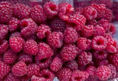 Raspberry. Fresh organic raspberries fruits. Raspberry as background. Selective focus. Fruits vitamins Stock Image