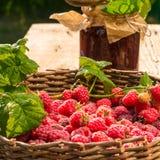 Raspberry Royalty Free Stock Photography