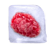 Raspberry frozen in ice cube. Isolated on white background Royalty Free Stock Photo
