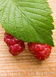 Raspberry fruit Stock Photography