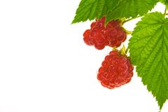 Raspberry fruit Royalty Free Stock Photos