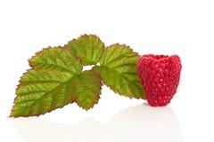 Raspberry Fruit Stock Image