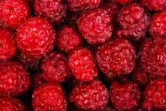 Raspberry fruit as background Stock Image