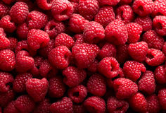 Raspberry fruit background Royalty Free Stock Photos