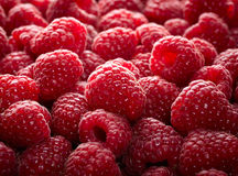 Raspberry fruit background Stock Photography