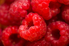Raspberry fruit background. Fresh Raspberry fruit red background Royalty Free Stock Photos