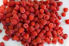Raspberry fruit background Royalty Free Stock Image