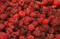 Raspberry fruit background. Ripe and beautyfull Raspberry fruit background textures Royalty Free Stock Images