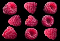 Raspberry fruit collection stock photography