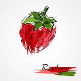Raspberry fruit Royalty Free Stock Images