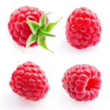 Raspberry. Fruit isolated on white. Set Royalty Free Stock Photography