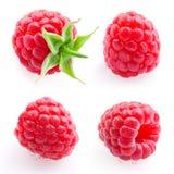 Raspberry. Fruit isolated on white. Set. Raspberry. Fruit isolated on white background. Set royalty free stock photography