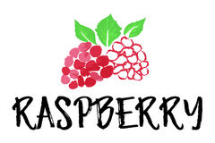 Raspberry fruit label and sticker. Vector illustration in watercolor style, for graphic and web design Royalty Free Stock Photography